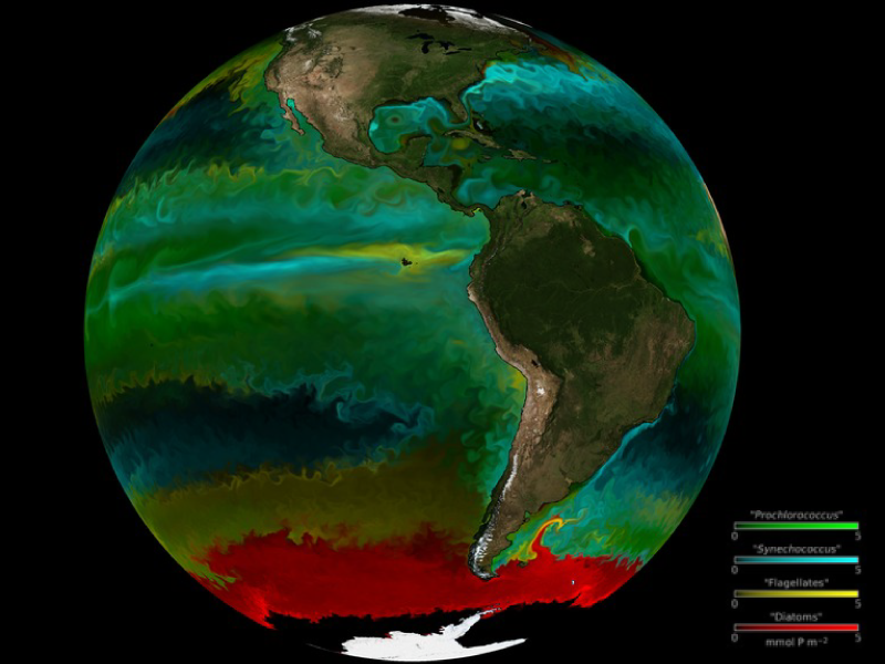 Distribution of phytoplankton the the world's oceans