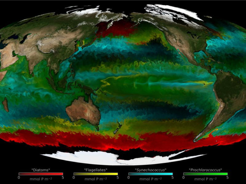 Distribution of four types of phytoplankton